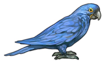 Parrot (Hyacinth Macaw)